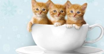 Tuyển tập hình ảnh những chú mèo con dễ thương và hài hước nhất 8