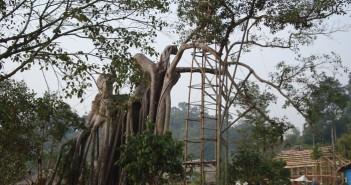 Hình ảnh cây đa đầu làng vô cùng thân thuộc và gần gũi với tuổi thơ 1