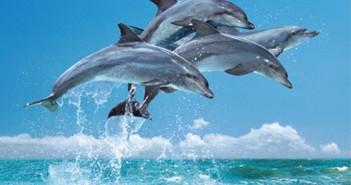 Hình ảnh những chú cá heo vô cùng dễ thương mà bạn sẽ muốn ngắm nhìn 1