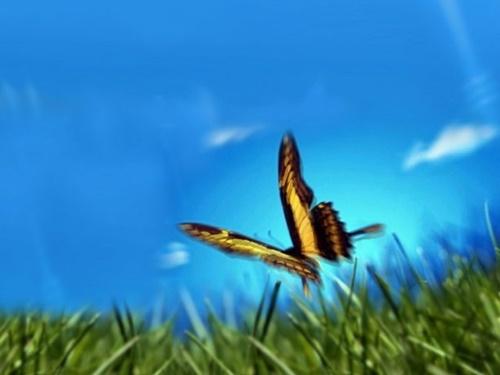 Hình ảnh con bướm xinh đang bay đẹp rực rỡ 15