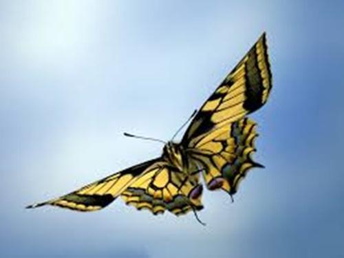 Hình ảnh con bướm xinh đang bay đẹp rực rỡ 17