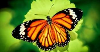 Hình ảnh con bướm xinh đang bay đẹp rực rỡ 2