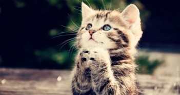 Hình ảnh con mèo dễ thương ai thấy cũng muốn nựng 18