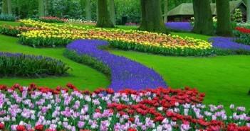 Hình ảnh những cánh đồng hoa Tulip đẹp lung linh sắc màu 1