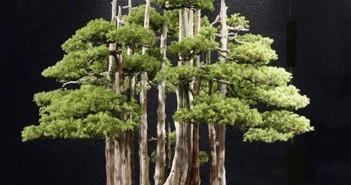 Hình ảnh những chậu Bonsai có dáng độc lạ làm mê mẩn giới cây cảnh 1