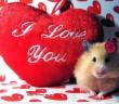 Hình trái tim đẹp dễ thương trên facebook 15