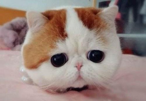 Ảnh mèo dễ thương cực cool và cực cute iu quá đi 13
