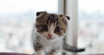 Ảnh mèo dễ thương cực cool và cực cute iu quá đi 24