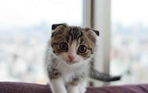 Ảnh mèo dễ thương cực cool và cực cute iu quá đi