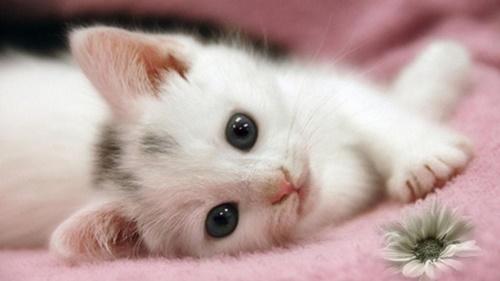Ảnh mèo dễ thương cực cool và cực cute iu quá đi 5