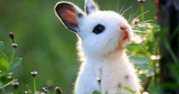 Hình ảnh con thỏ hoạt hình đẹp nhất dễ thương cho bé tô màu 6