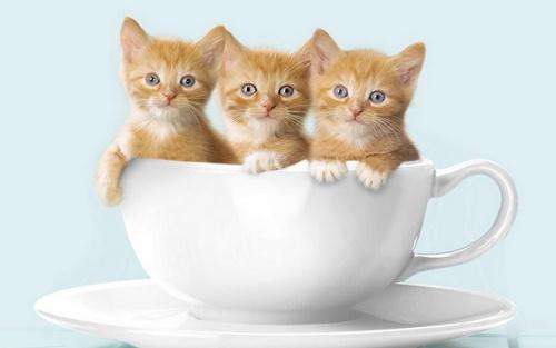 Hình ảnh mèo con dễ thương buồn ngộ nghĩnh đáng yêu 15