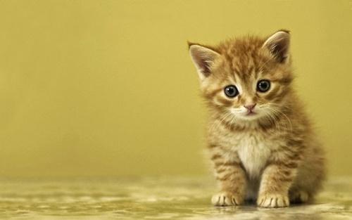 Hình ảnh mèo con dễ thương buồn ngộ nghĩnh đáng yêu 2