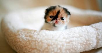 Hình ảnh mèo con dễ thương buồn ngộ nghĩnh đáng yêu 28