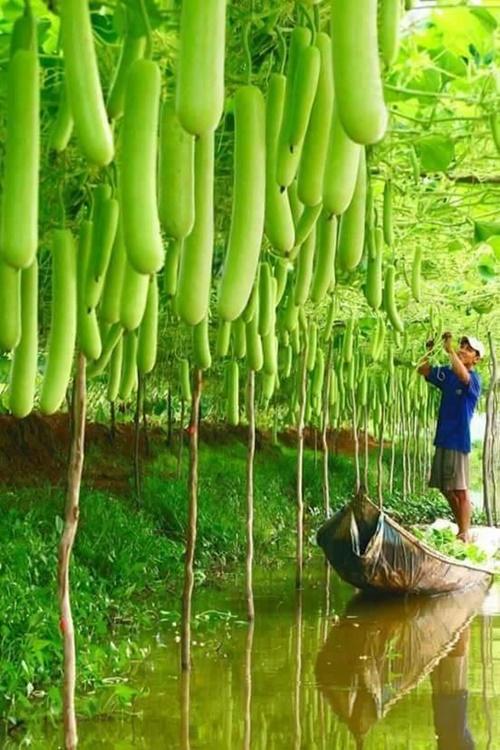 Hình ảnh trái cây nhập khẩu từ nông sản thái lan nhìn muốn hoa mắt vì đẹp 15