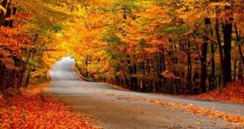Ảnh mùa thu đẹp lãng mạn một dãi vàng ươm hút hồn du khách khắp thế giới 7