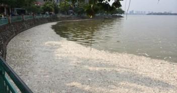 Hình ảnh cá chết nổi trắng cả Hồ Tây khiến dư luận bức xúc hiện nay 27