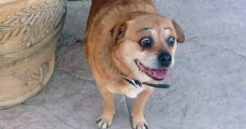 Hình ảnh con chó đẹp dễ thương ngộ nghĩnh khi chủ nhân vẽ cho cặp lông mày 12