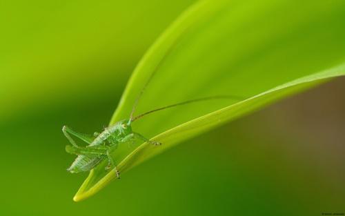 Top 10 hình nền đẹp chủ đề động vật côn trùng nổi tiếng nhất 19