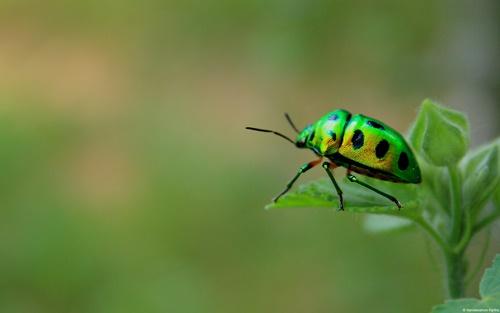 Top 10 hình nền đẹp chủ đề động vật côn trùng nổi tiếng nhất 24