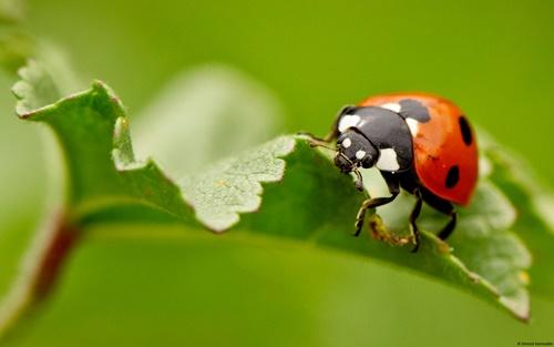Top 10 hình nền đẹp chủ đề động vật côn trùng nổi tiếng nhất 33