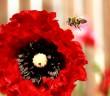 Top 10 hình nền đẹp chủ đề động vật côn trùng nổi tiếng nhất 8